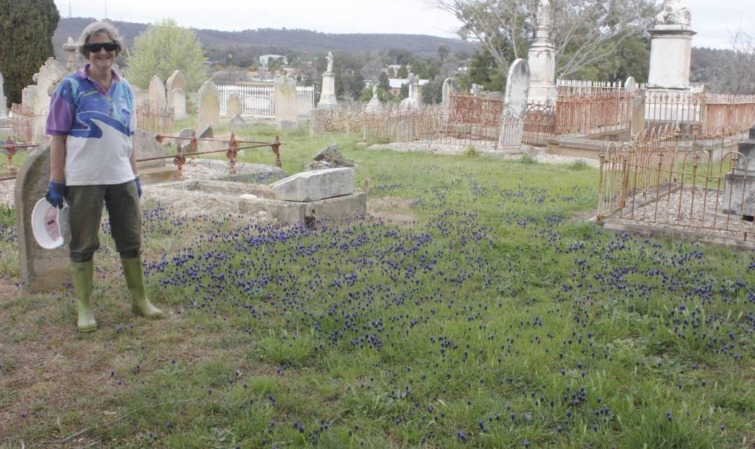 Have a look at St Saviours Cemetery and Mortis St Cemetery. Photo: Burney Wong.
